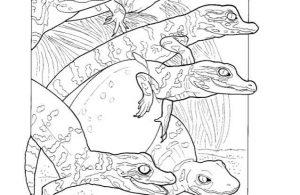 Mewarnai Gambar Keluarga Aligator
