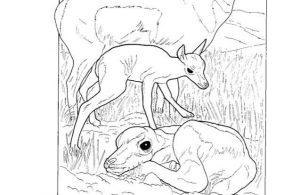 Mewarnai Gambar Keluarga Antelop