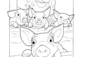 Mewarnai Gambar Keluarga Babi