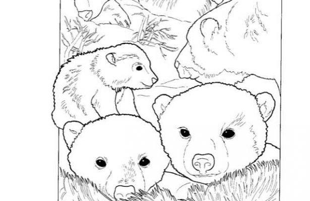 Mewarnai Gambar Keluarga Beruang Kutub