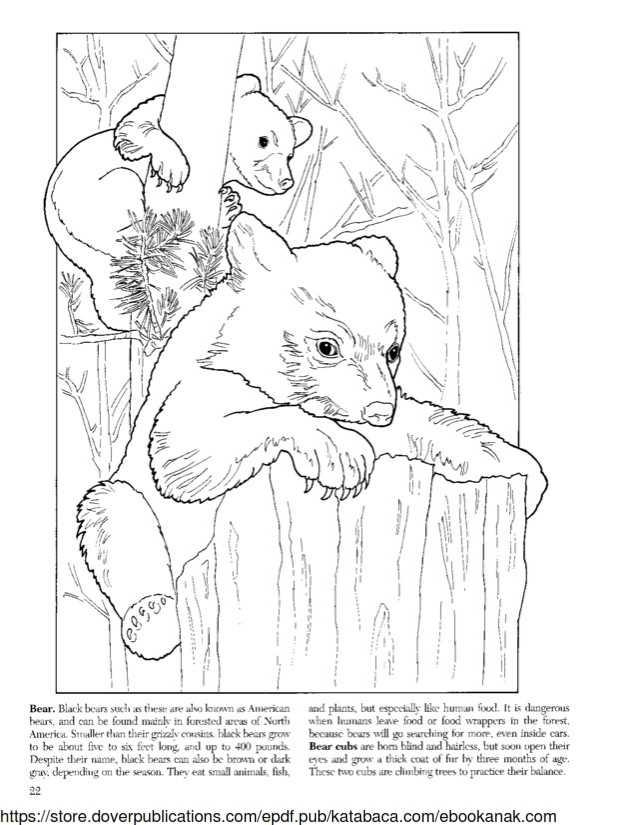 Mewarnai Gambar Keluarga Beruang