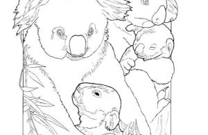 Mewarnai Gambar Keluarga Koala