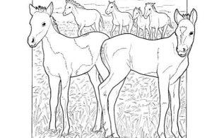 Mewarnai Gambar Keluarga Kuda Poni