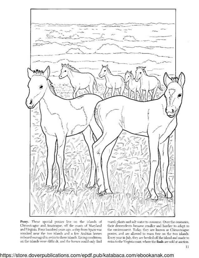 Mewarnai Gambar Keluarga Kuda Poni Ebook Anak