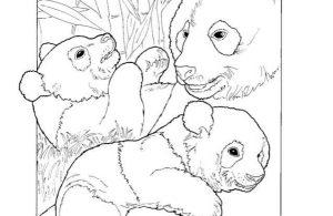 Mewarnai Gambar Keluarga Panda Raksasa