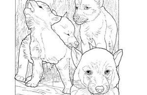 Mewarnai Gambar Keluarga Serigala