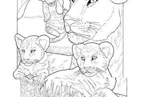 Mewarnai Gambar Keluarga Singa