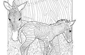 Mewarnai Gambar Keluarga Zebra