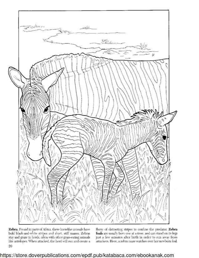 Mewarnai Gambar Keluarga Zebra Ebook Anak