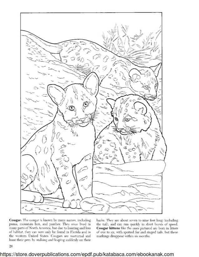 Mewarnai Keluarga Kucing Gunung