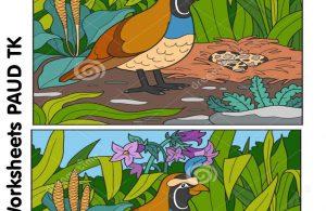 Worksheets Mencari Perbedaan 12 Gambar Burung Puyuh
