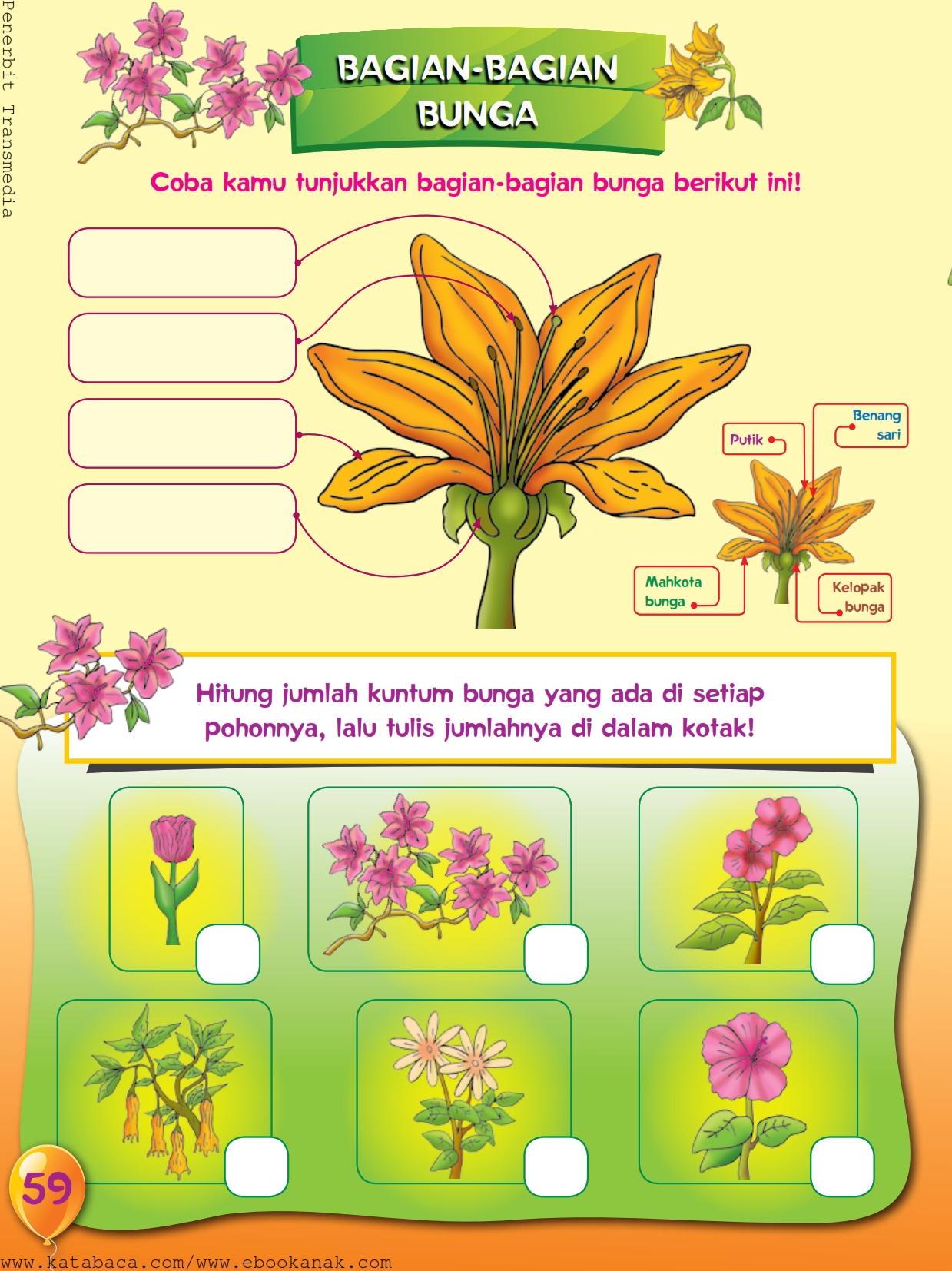 baca buku online, buku aktivitas anak jenius TK A B_062 mengenal gambar bagian-bagian bunga